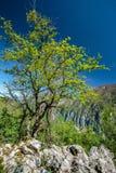 Limestone mountains Stock Image