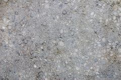 Limestone with nummulites Royalty Free Stock Photos