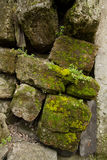Limestone overgrown with moss Royalty Free Stock Image