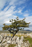 Limestone Pavement Royalty Free Stock Photography
