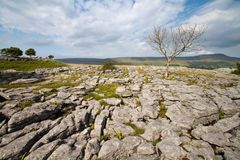 Limestone Pavement Stock Photo