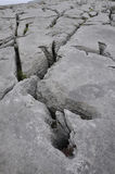 Limestone Pavement Grykes Stock Photography