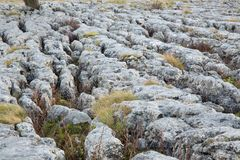 Limestone Pavement. In the Yorkshire Dales Royalty Free Stock Photography