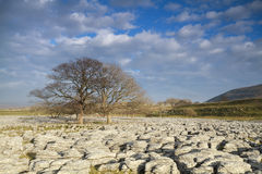 Limestone Pavement in the yorkshire dales Stock Photography