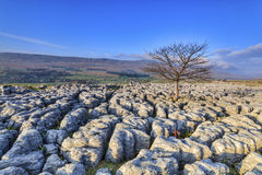 Limestone Pavement in the yorkshire dales royalty free stock photos