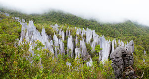 Limestone pinnacles at gunung mulu national park Royalty Free Stock Image