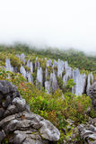 Limestone pinnacles at gunung mulu national park Royalty Free Stock Images