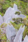 Limestone pinnacles at gunung mulu national park Stock Photography