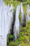 Limestone pinnacles at gunung mulu national park Stock Image