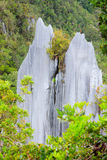 Limestone pinnacles at gunung mulu national park Royalty Free Stock Photography