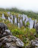 Limestone pinnacles at gunung mulu national park. Limestone pinnacles formation at gunung mulu national park borneo malaysia stock photos