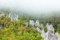 Limestone pinnacles at gunung mulu national park Stock Images