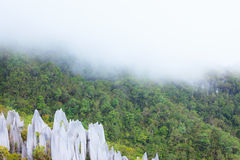 Limestone pinnacles at gunung mulu national park Royalty Free Stock Photo