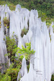 Limestone pinnacles at gunung mulu national park Royalty Free Stock Photos