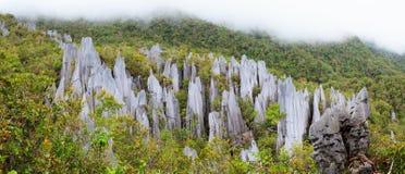 Limestone pinnacles at gunung mulu national park Stock Images