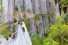 Limestone pinnacles at gunung mulu national park Stock Photos