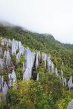 Limestone pinnacles at gunung mulu national park royalty free stock images