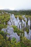 Limestone pinnacles at gunung mulu national park stock image