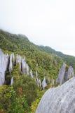 Limestone pinnacles at gunung mulu national park Royalty Free Stock Image