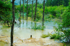 Limestone pools in Huanglong. Nature protection area, Sichuan province, South-West China Stock Photos