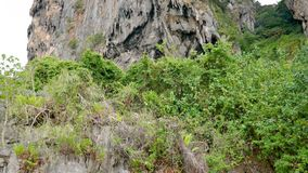 Limestone Rock With Bushes Panning From Top To Bottom To The Sea That Washes It. Top down panorama, limestone high rock with thickets of bushes on the shore of stock video