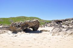 Limestone Rock Formations: Penguin Island, Western Australia Royalty Free Stock Image