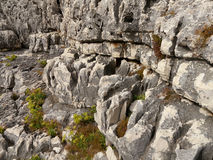 Limestone rock structure Stock Photos