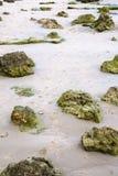limestone rocks in sand on beach of Atlantic Ocean Royalty Free Stock Images