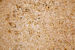Limestone sandstone texture with animal shells Royalty Free Stock Photos
