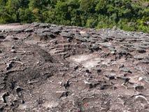 Limestone surface in Bako, Malaysia Royalty Free Stock Photo
