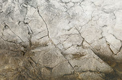 Limestone surface. Texture of stone on the seashore Royalty Free Stock Image