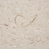 Limestone texture Royalty Free Stock Photos