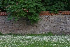 Limestone wall Royalty Free Stock Photos