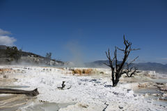 Limestone in Yellowstone National Park stock photography