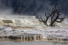 Limestone in Yellowstone National Park Royalty Free Stock Photo
