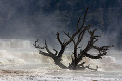 Limestone in Yellowstone National Park royalty free stock photos