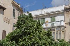 Limettenbäume, die in Plaza de Majorca wachsen stockfoto