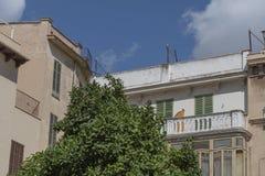 Limettenbäume, die in Plaza de Majorca wachsen stockbild