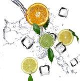 Limettes et oranges avec l'éclaboussure de l'eau et les glaçons Photo libre de droits