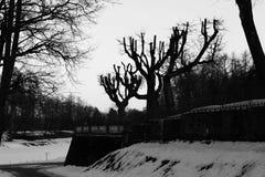 limettiers cisaillés en parc de Gatchina Pékin, photo noire et blanche de la Chine image libre de droits