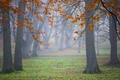 Limettiers dans le brouillard Photo libre de droits
