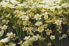 limitazione della natura delicata di tema della carta da parati dei fiori Immagini Stock