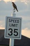 Limite de velocidade Imagens de Stock