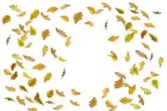 Limite o quadro das folhas de outono coloridas isoladas no branco fotos de stock royalty free