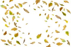 Limite o quadro das folhas de outono coloridas isoladas no branco imagem de stock royalty free