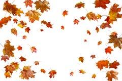 Limite o quadro das folhas de outono coloridas isoladas no branco imagens de stock royalty free
