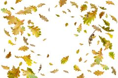 Limite o quadro das folhas de outono coloridas isoladas no branco foto de stock