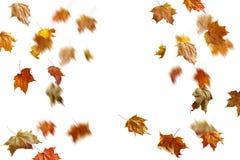 Limite o quadro das folhas de outono coloridas isoladas no branco foto de stock royalty free