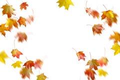 Limite o quadro das folhas de outono coloridas isoladas no branco fotos de stock