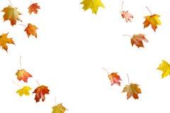 Limite o quadro das folhas de outono coloridas isoladas no branco fotografia de stock royalty free